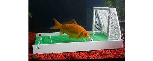 r2fish