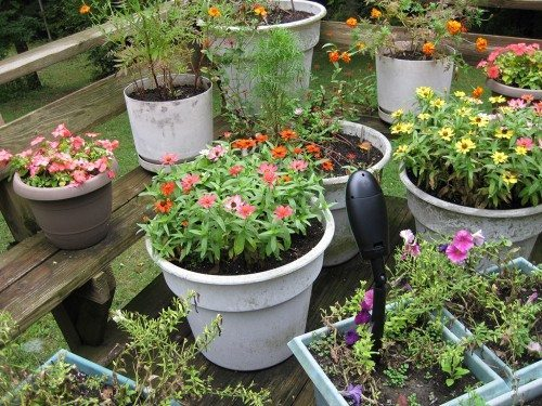gardenwatch cam 10