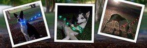 dog-e-glow