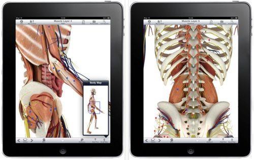 pocket body app