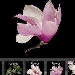 LeafSnap App.jpg