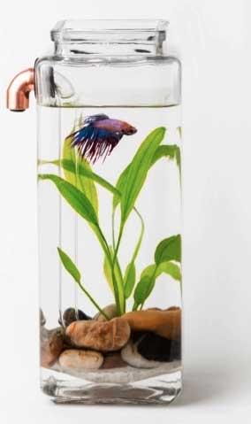 noclean-aquarium