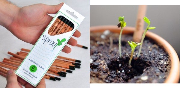 sprout pencil kit