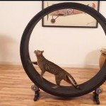 one-fast-cat-exercise-wheel-2