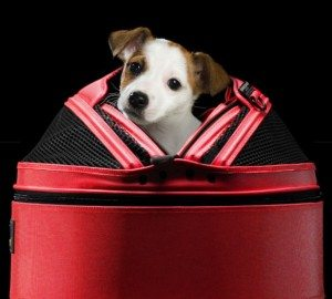 sleepypod-mobile-pet-bed-2