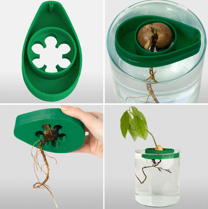 Avoseedo lets you grow your own avocado tree even if you for How do you grow an avocado seed