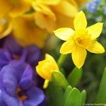 spring-contest