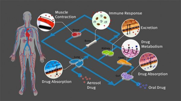 Organs-on-Chips-3