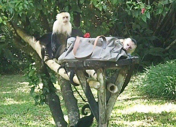 Monkey Movie-021-v3