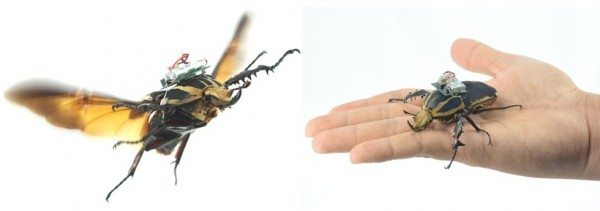 remote-controlled-beetles