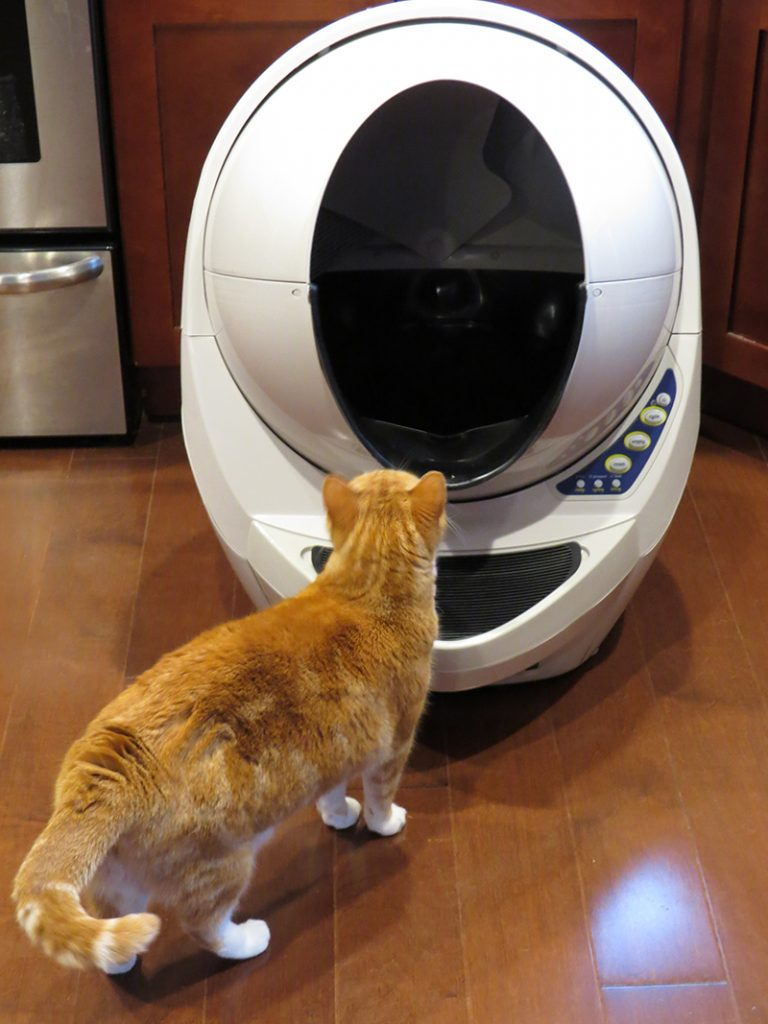 Litter Box Dog Can T Get Into