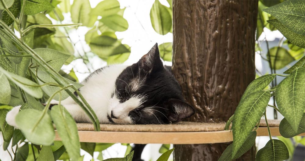 you won t need a fireman to get your cat out of this tree the gadgeteer. Black Bedroom Furniture Sets. Home Design Ideas