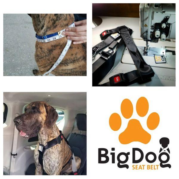 big dog seat belt 1