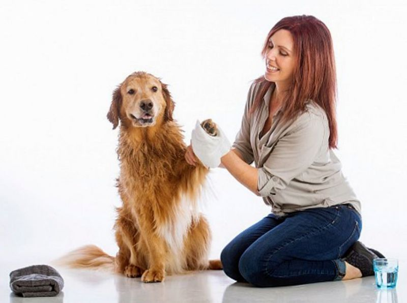 Scrubby Rinse-Free Pet Bath Mittens make bathing your dog easier and less stressful