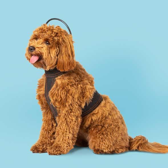 calmer canine 2