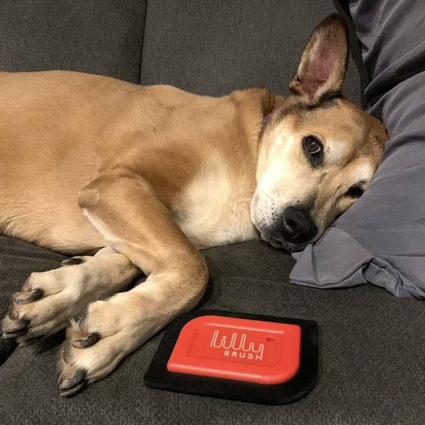 Lilly Brush Mini Pet Hair Detailer review