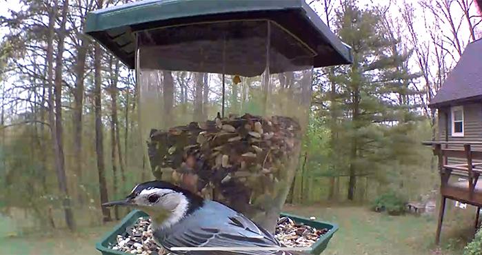 blinkcam birdcam 6